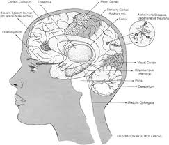 Alzheimer's Regimen