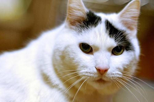 wild cat rescue wisconsin