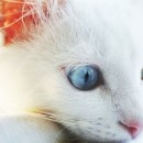 Cat Seizure Symptoms