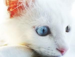 Cat Seizure Symptoms.jpg