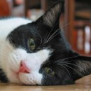 Information about Blind Feline Epilepsy