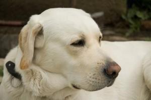 Grand Mal Seizures of Dogs.jpg