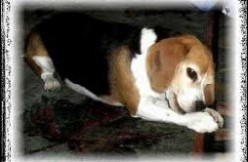 Dog Seizure Medications.jpg